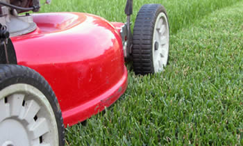 Lawn Care in Wilmington NC Lawn Care Services in Wilmington NC Quality Lawn Care in Wilmington NC