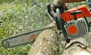 Tree Removal in Wilmington NC Tree Removal Quotes in Wilmington NC Tree Removal Estimates in Wilmington NC Tree Removal Services in Wilmington NC Tree Removal Professionals in Wilmington NC Tree Services in Wilmington NC