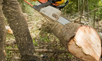 Tree Service in Wilmington NC Tree Service Estimates in Wilmington NC Tree Service Quotes in Wilmington NC Tree Service Professionals in Wilmington NC