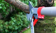 Tree Pruning Services in Wilmington NC